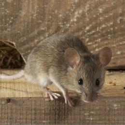 Živolovná pasca na myši M4